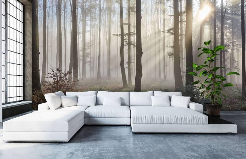Papier peint de la forêt - Forêt brumeuse - Chambre à coucher 5