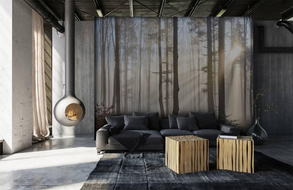 Papier peint de la forêt - Forêt brumeuse - Chambre à coucher 6