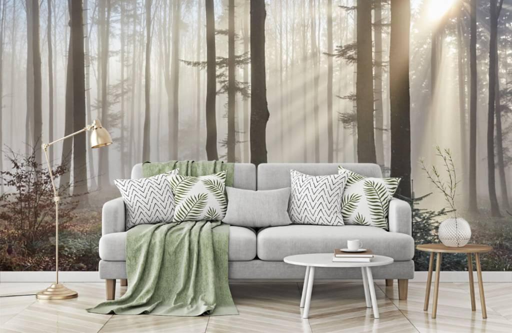 Papier peint de la forêt - Forêt brumeuse - Chambre à coucher 7