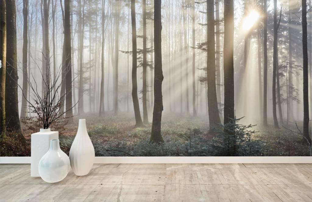 Papier peint de la forêt - Forêt brumeuse - Chambre à coucher 8