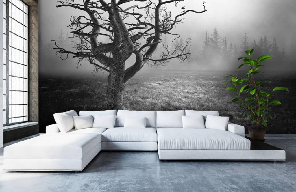 Papier peint noir et blanc - Arbre élégant - Chambre à coucher 1
