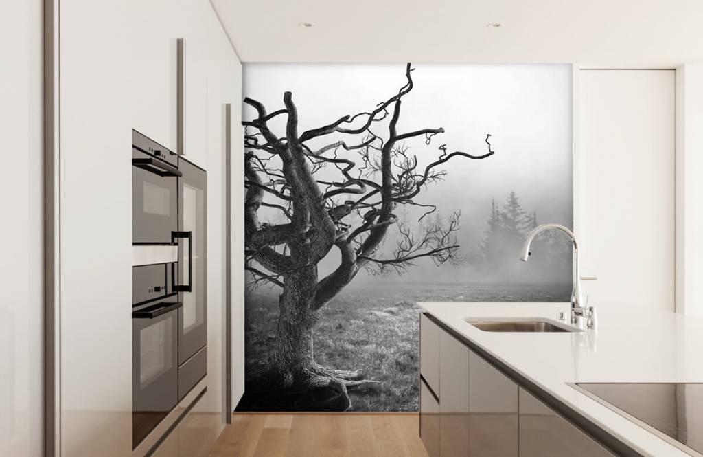 Papier peint noir et blanc - Arbre élégant - Chambre à coucher 4