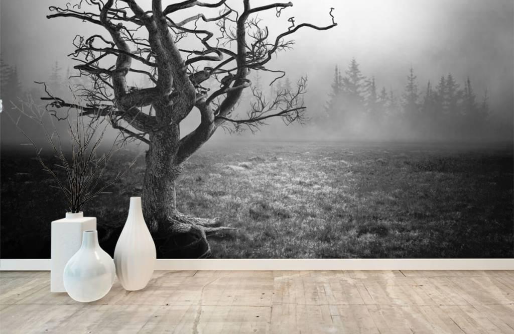 Papier peint noir et blanc - Arbre élégant - Chambre à coucher 8