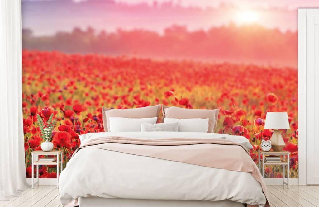 Champs fleuris - Champ plein de coquelicots - Chambre à coucher 2