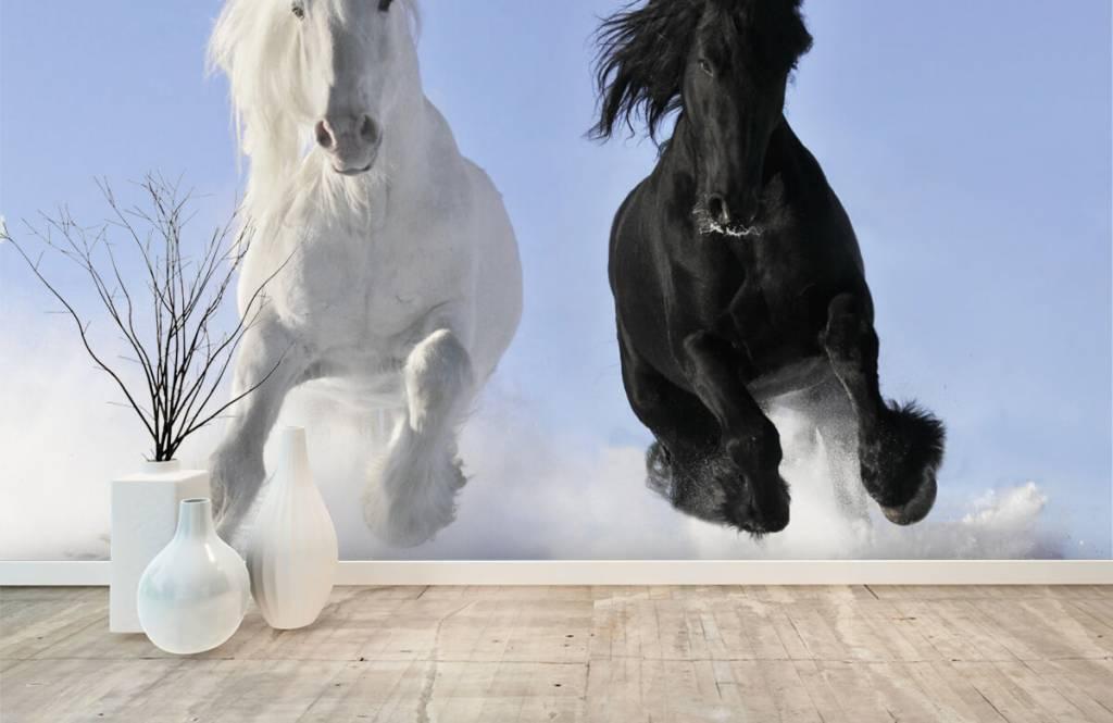 Chevaux - Cheval blanc et noir - Chambre d'adolescent 1