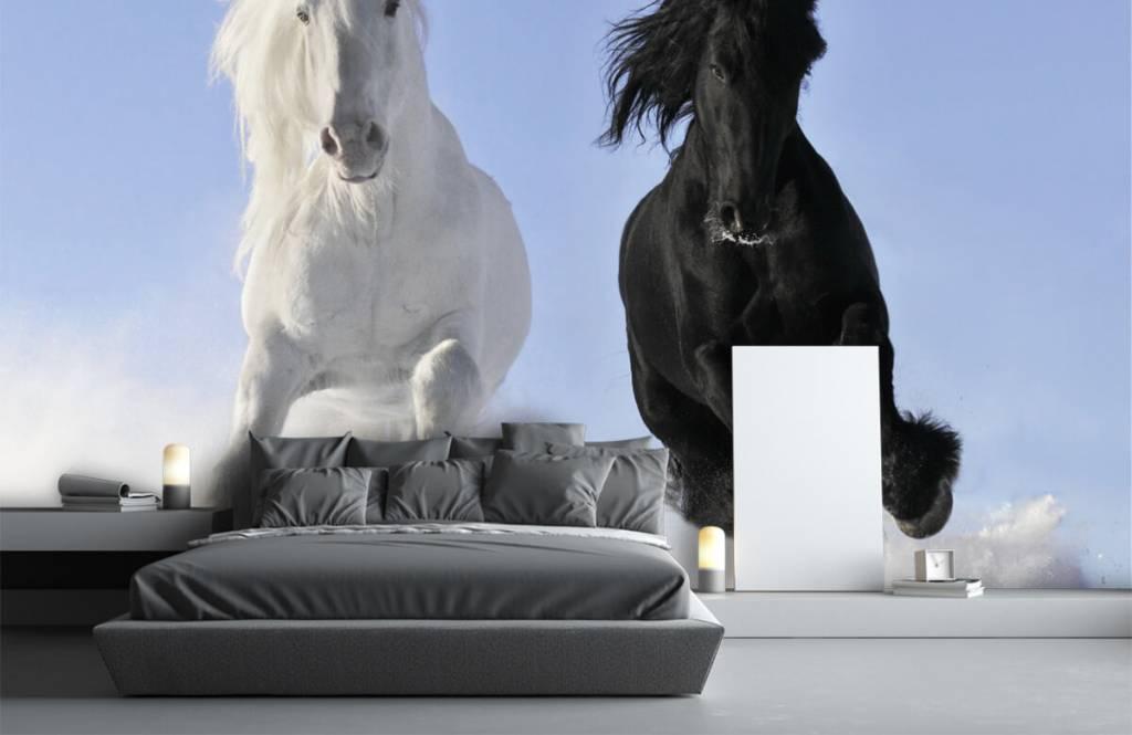Chevaux - Cheval blanc et noir - Chambre d'adolescent 3