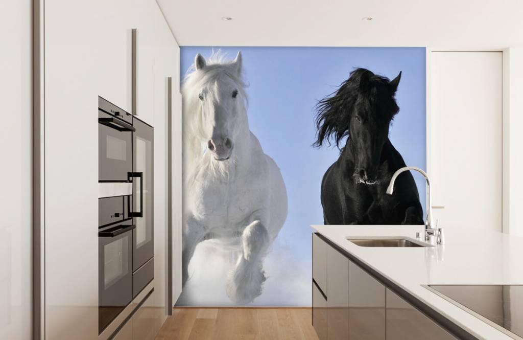 Chevaux - Cheval blanc et noir - Chambre d'adolescent 4