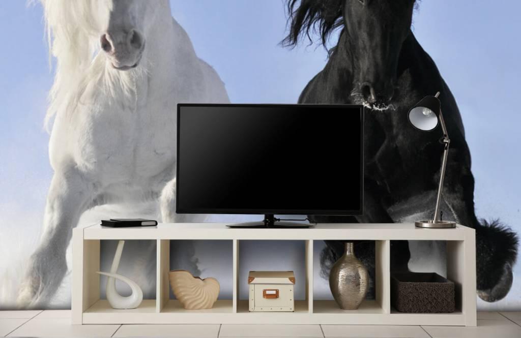 Chevaux - Cheval blanc et noir - Chambre d'adolescent 5