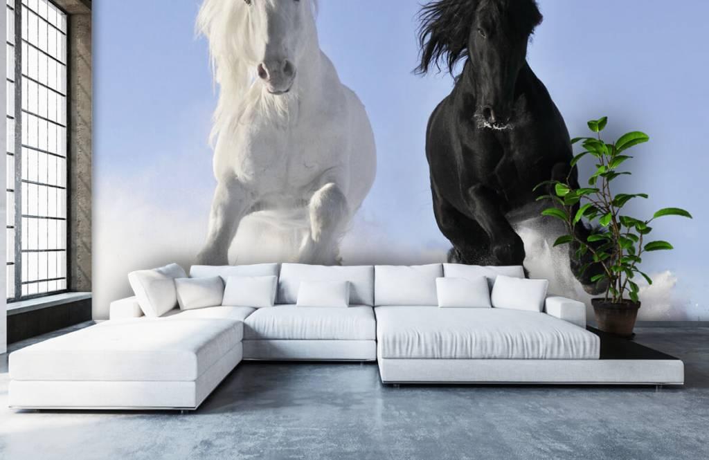 Chevaux - Cheval blanc et noir - Chambre d'adolescent 6