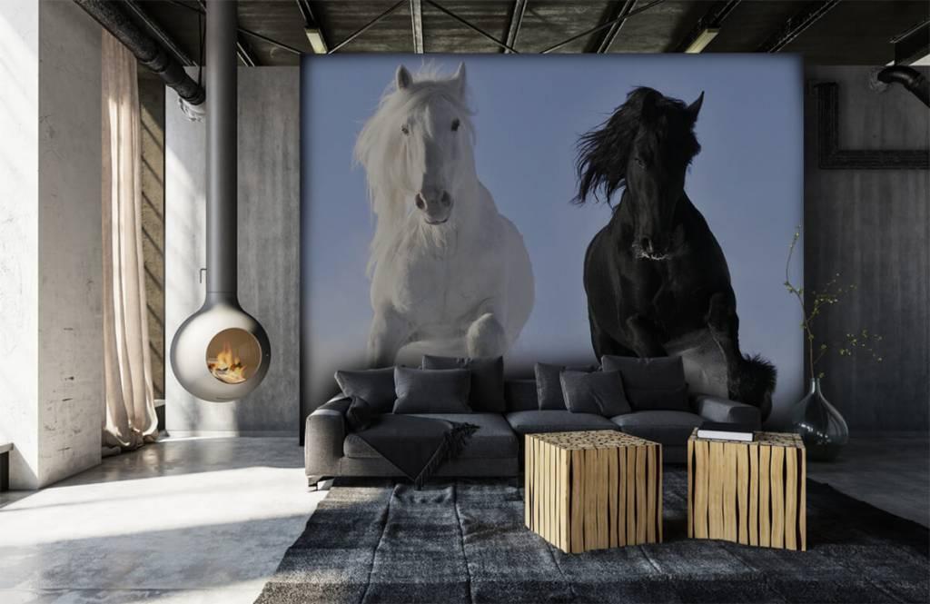 Chevaux - Cheval blanc et noir - Chambre d'adolescent 7