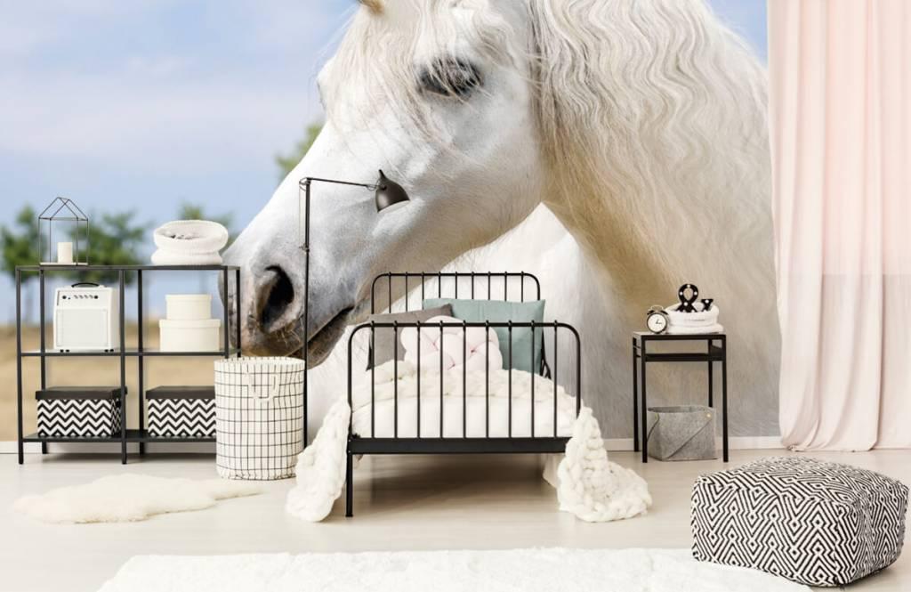 Chevaux - Licorne blanche - Chambre d'enfants 2