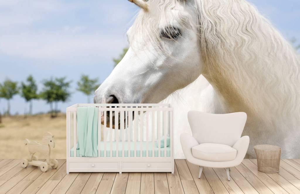 Chevaux - Licorne blanche - Chambre d'enfants 5