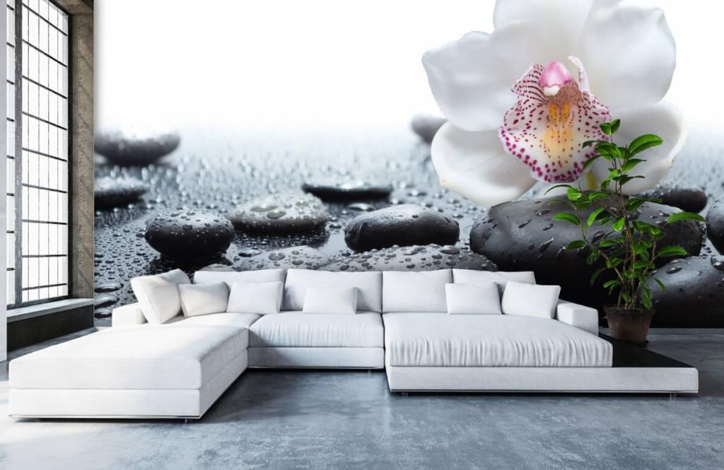 Autre - Orchidée blanche - Réception 1