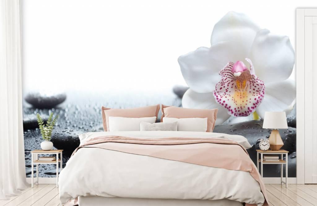 Autre - Orchidée blanche - Réception 2