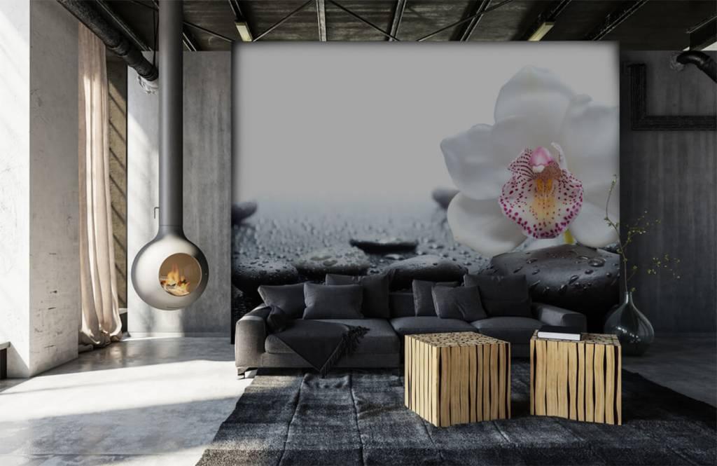 Autre - Orchidée blanche - Réception 6