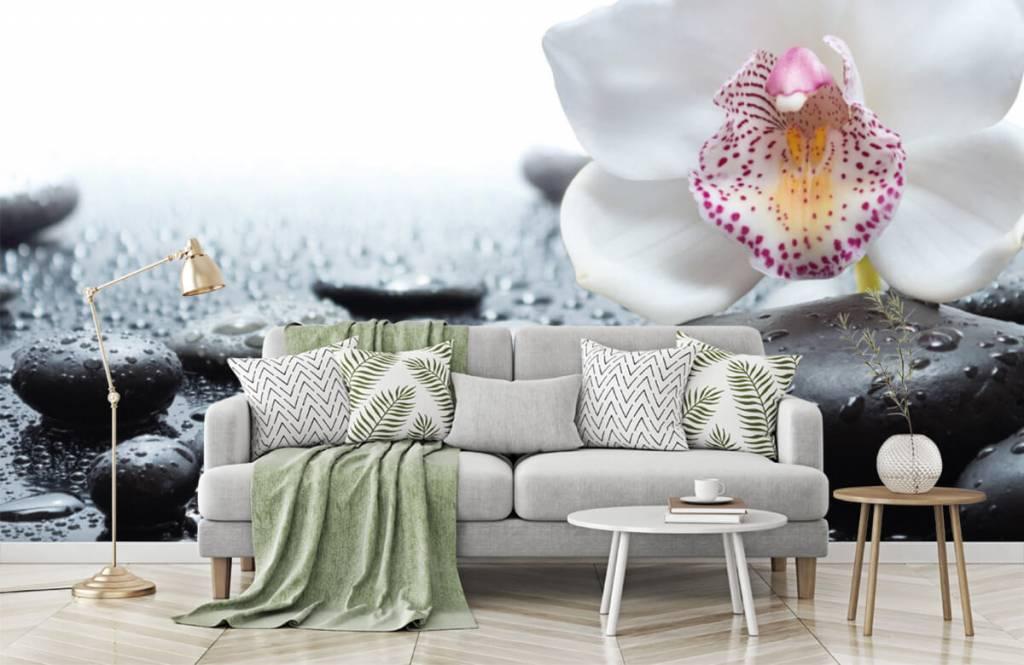 Autre - Orchidée blanche - Réception 7