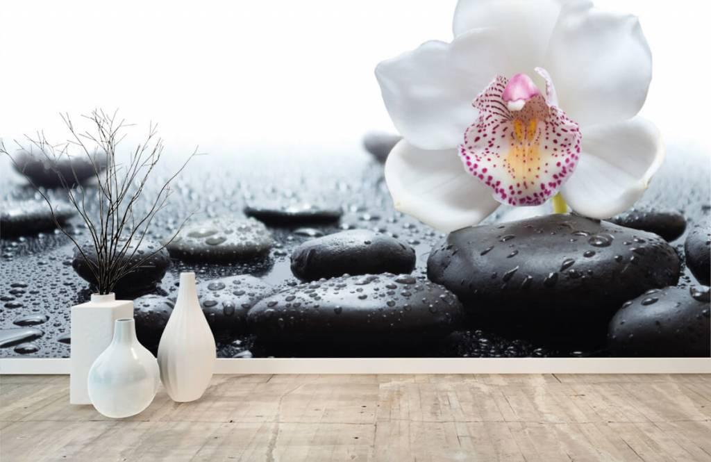 Autre - Orchidée blanche - Réception 8