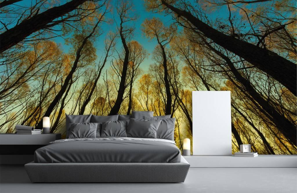 Papier peint de la forêt - Lever de soleil entre les grands arbres - Chambre à coucher 1