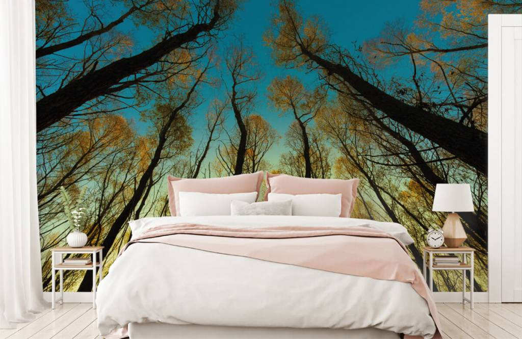 Papier peint de la forêt - Lever de soleil entre les grands arbres - Chambre à coucher 2