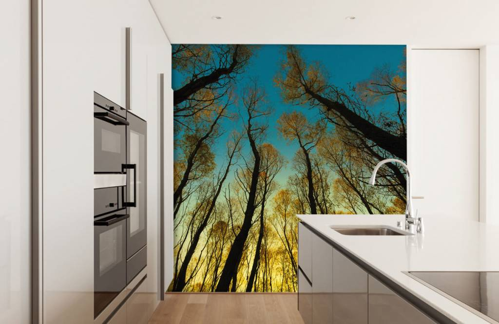 Papier peint de la forêt - Lever de soleil entre les grands arbres - Chambre à coucher 3