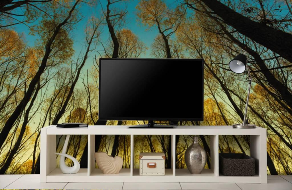 Papier peint de la forêt - Lever de soleil entre les grands arbres - Chambre à coucher 4