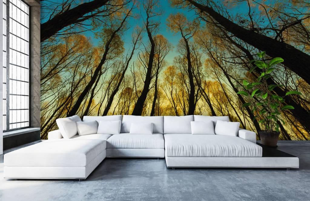 Papier peint de la forêt - Lever de soleil entre les grands arbres - Chambre à coucher 5