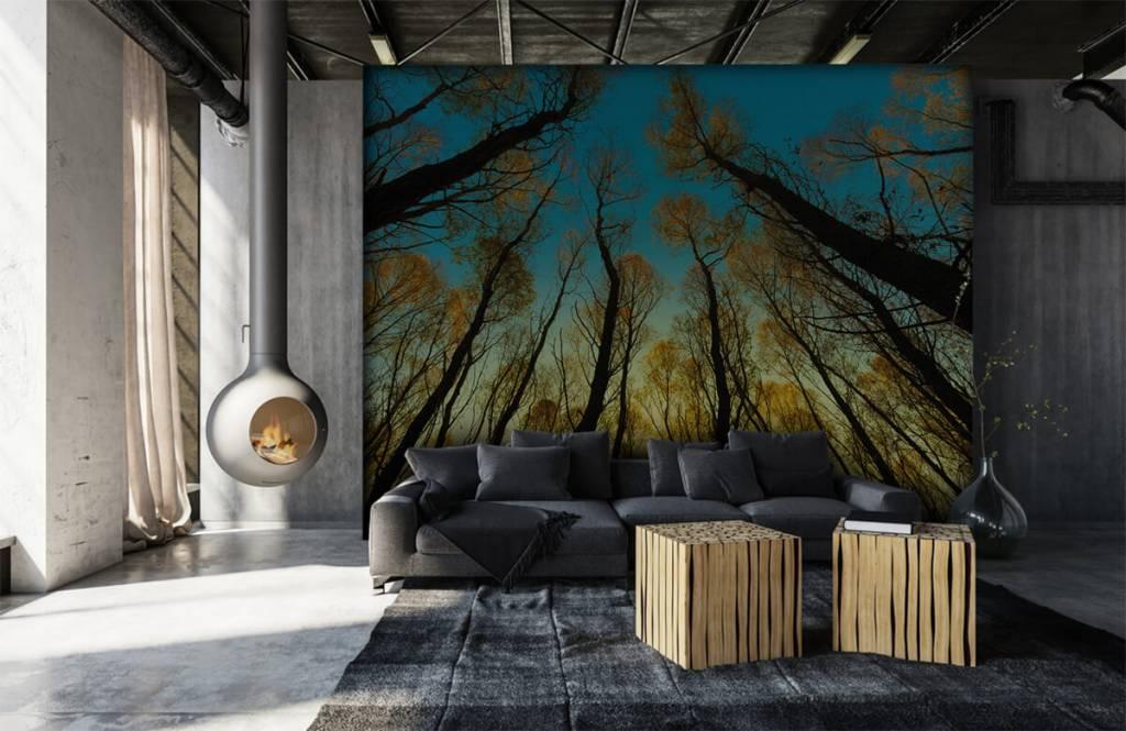 Papier peint de la forêt - Lever de soleil entre les grands arbres - Chambre à coucher 6