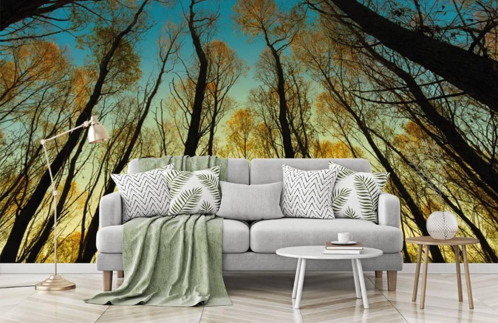 Papier peint de la forêt - Lever de soleil entre les grands arbres - Chambre à coucher 7
