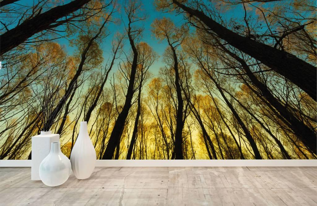 Papier peint de la forêt - Lever de soleil entre les grands arbres - Chambre à coucher 8
