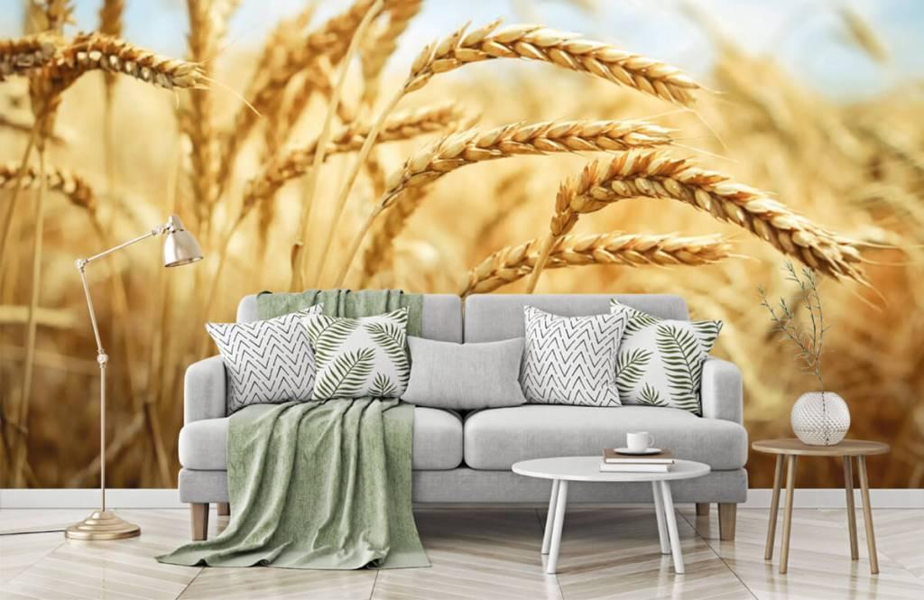 Autre - Céréales - Cuisine 7