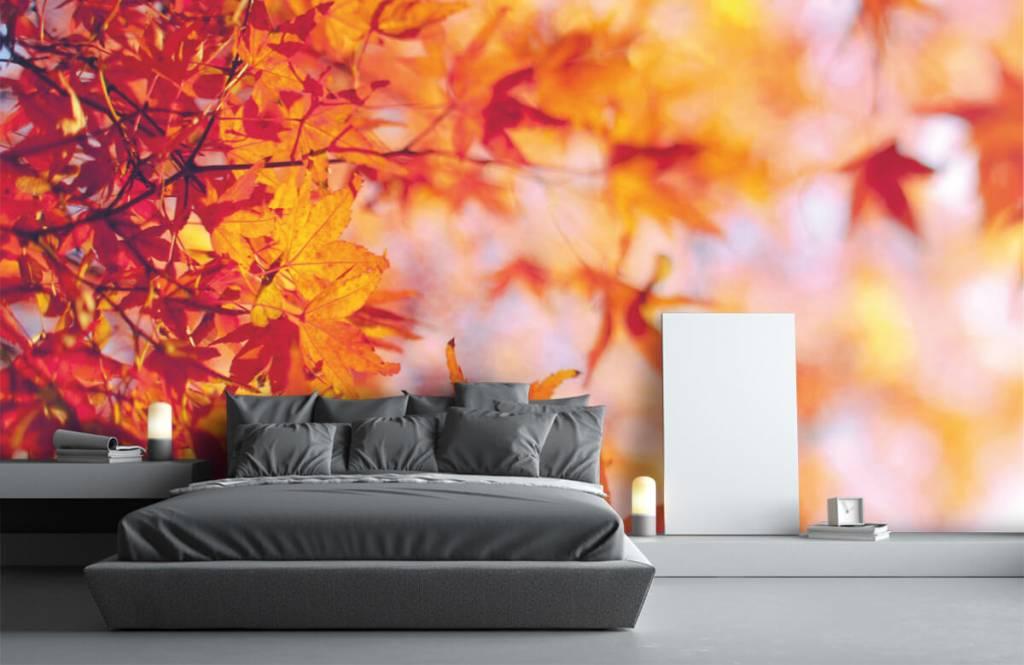 Feuilles - Feuilles d'automne - Chambre à coucher 2