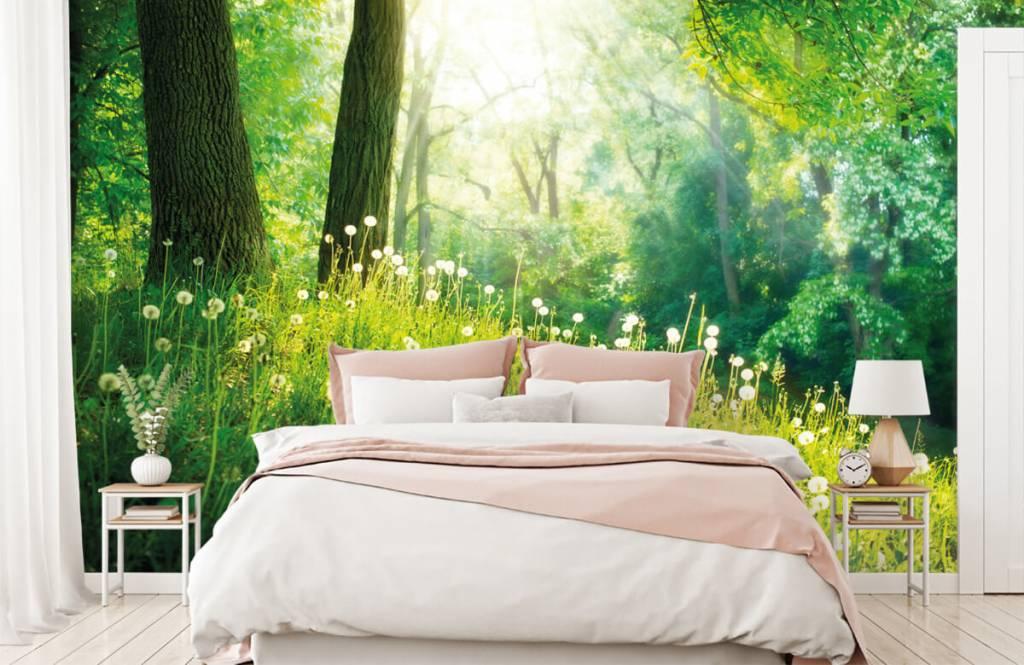Papier peint de la forêt - Pissenlits - Chambre à coucher 1