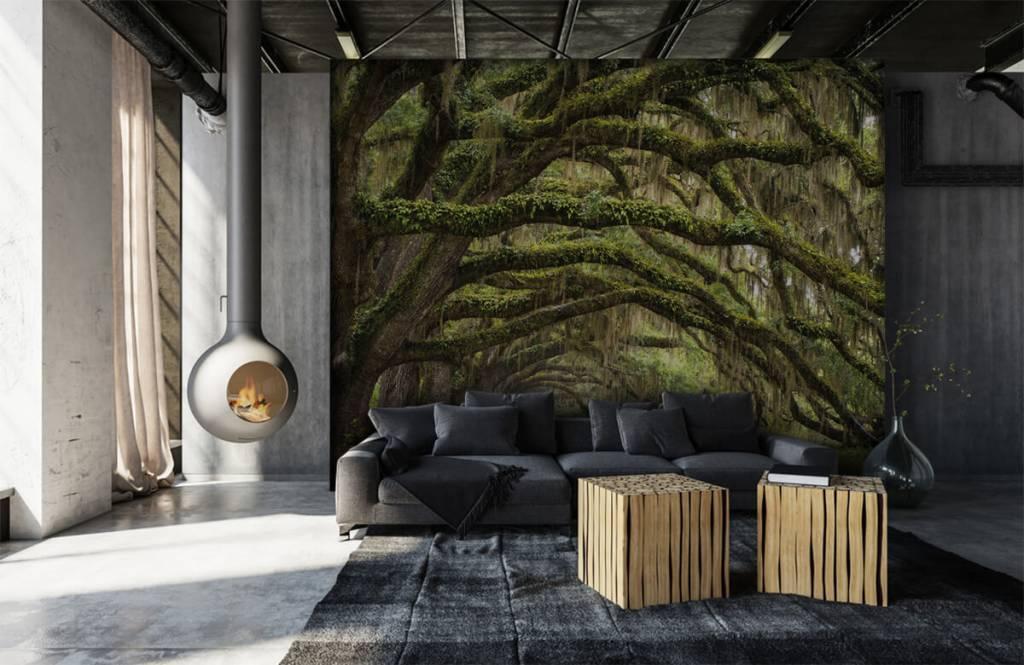 Papier peint de la forêt - Chênes - Chambre à coucher 1