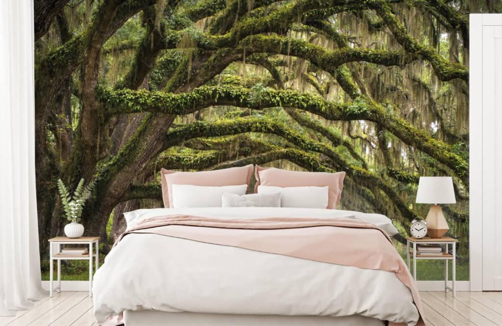 Papier peint de la forêt - Chênes - Chambre à coucher 2
