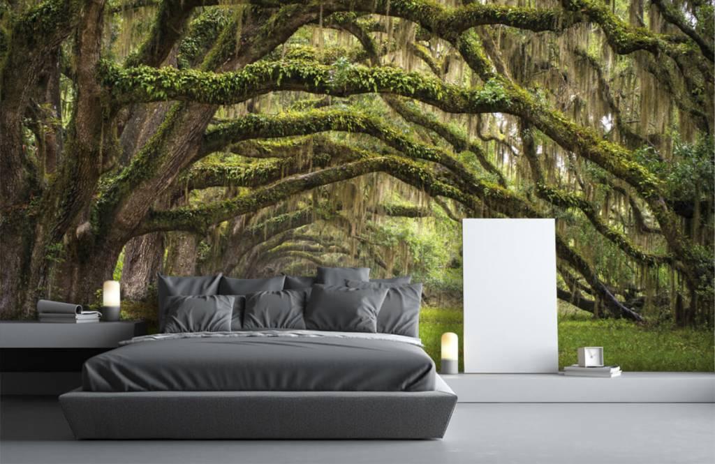 Papier peint de la forêt - Chênes - Chambre à coucher 3