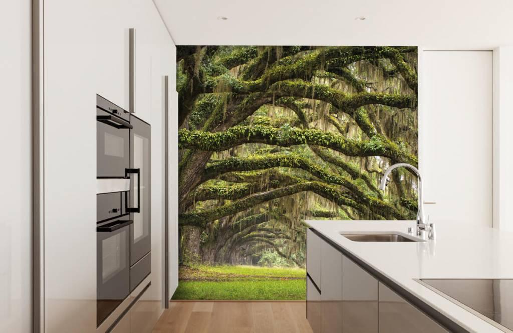 Papier peint de la forêt - Chênes - Chambre à coucher 4