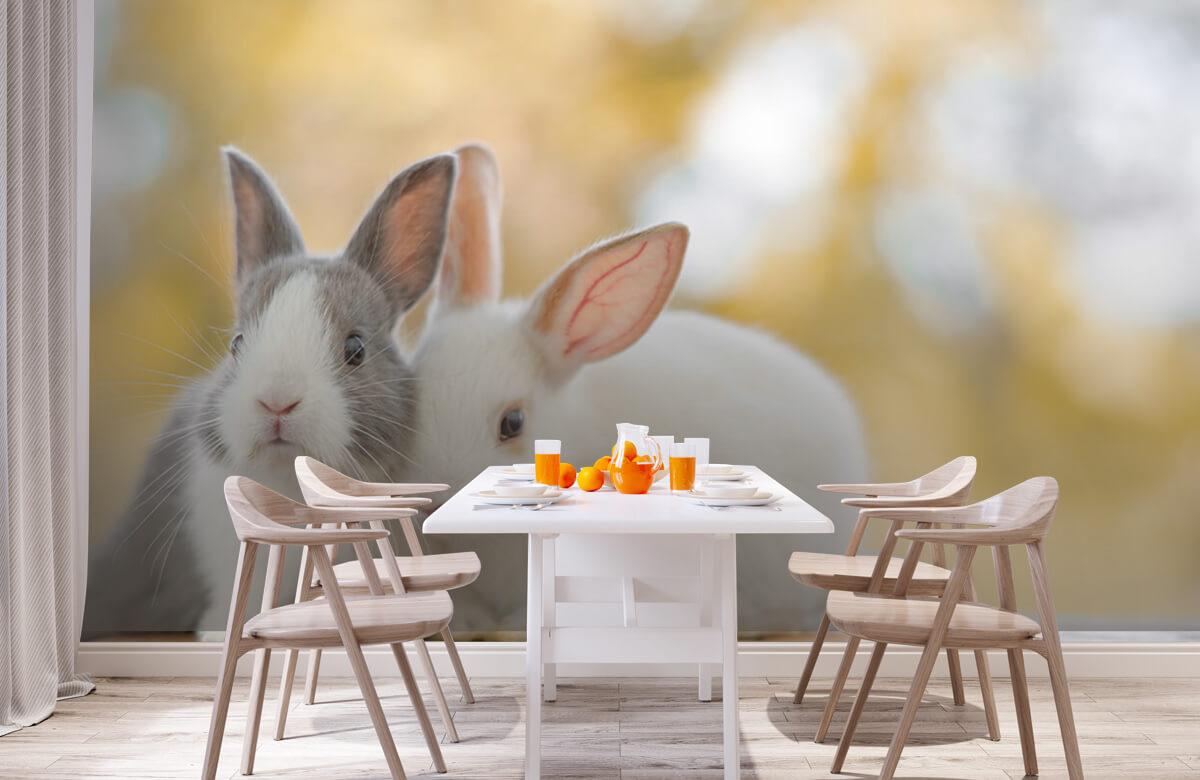 Wallpaper Gros plan sur des lapins 3