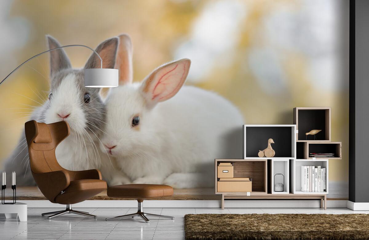 Wallpaper Gros plan sur des lapins 7