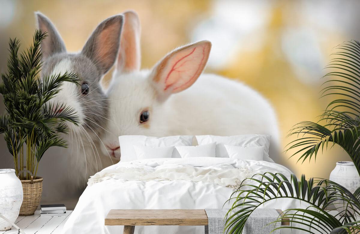 Wallpaper Gros plan sur des lapins 9
