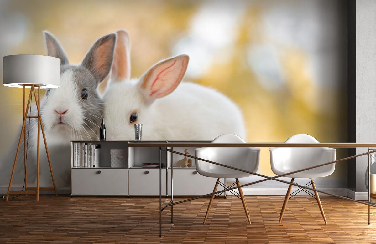 Wallpaper Gros plan sur des lapins 10