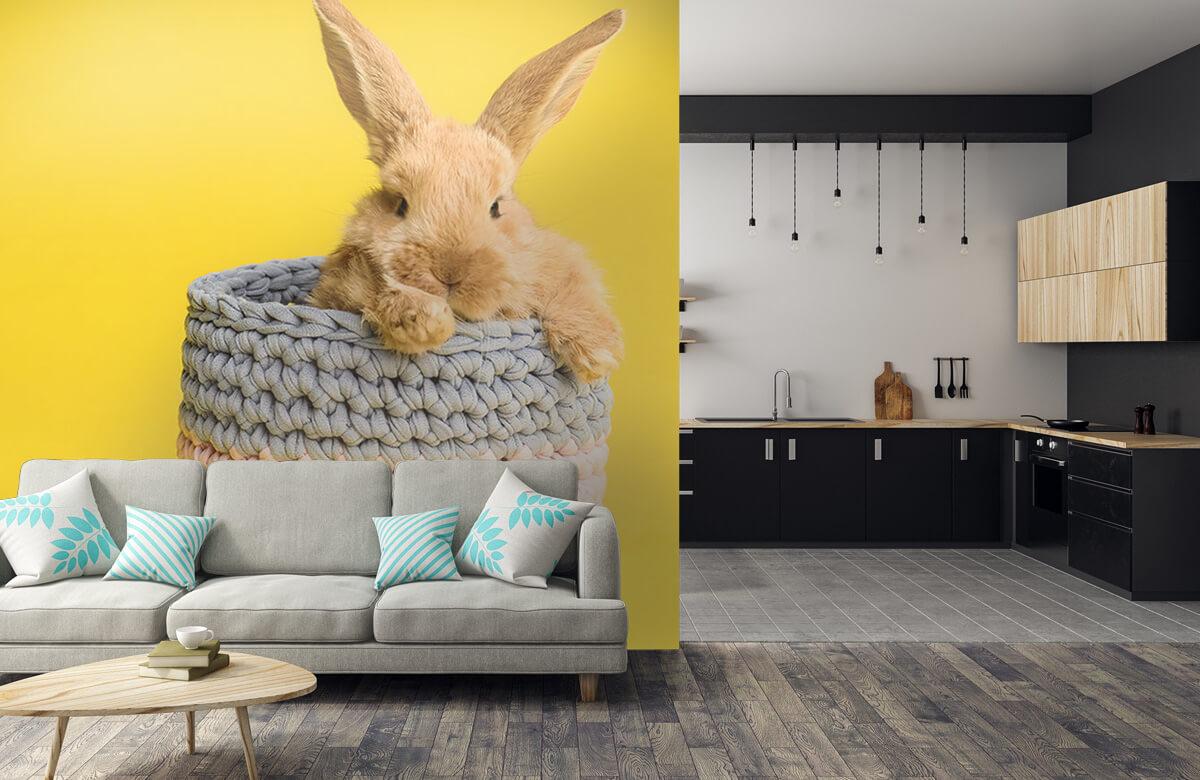 Wallpaper Lapin dans un panier 10