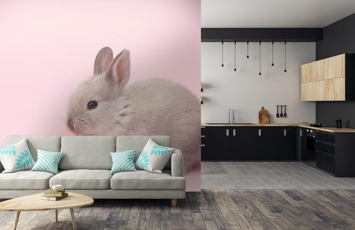 Wallpaper Lapin avec un œuf 10