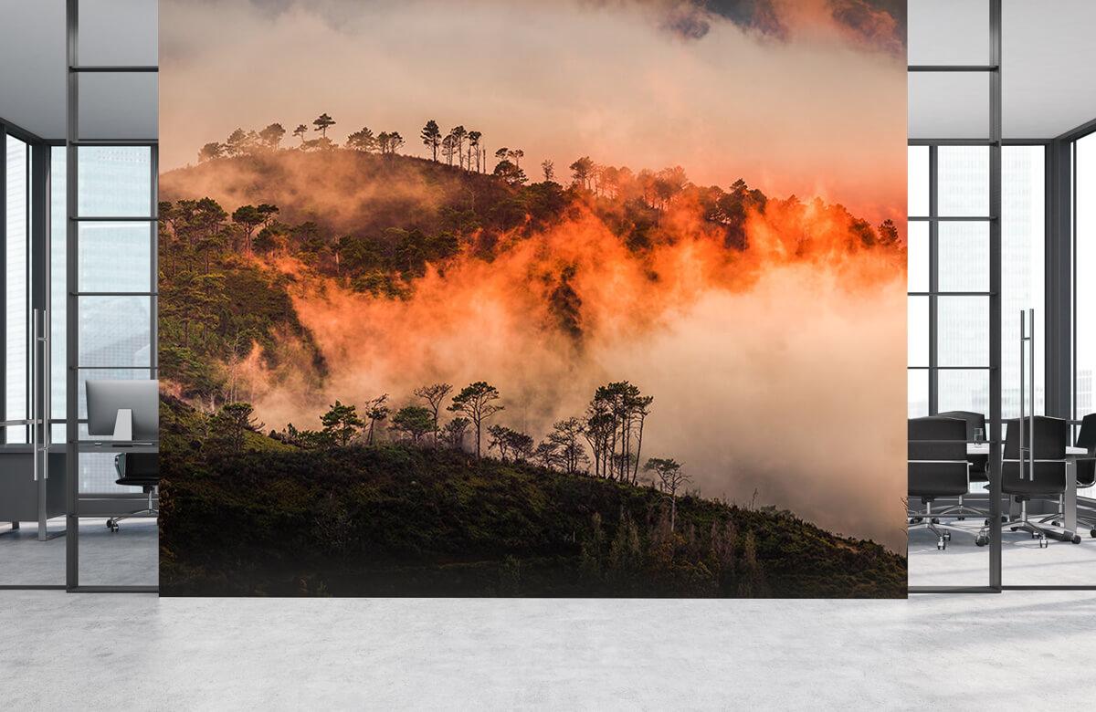 Wildfire 6
