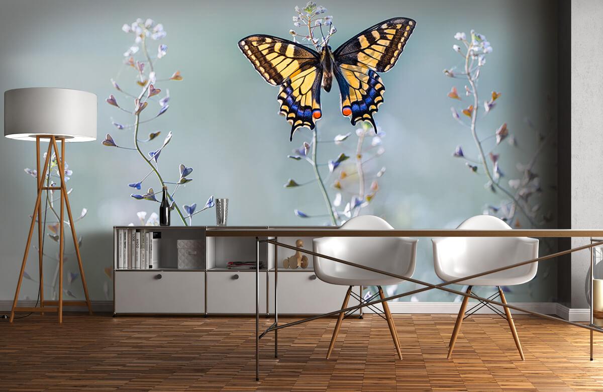 Macro Swallowtail beauty 1