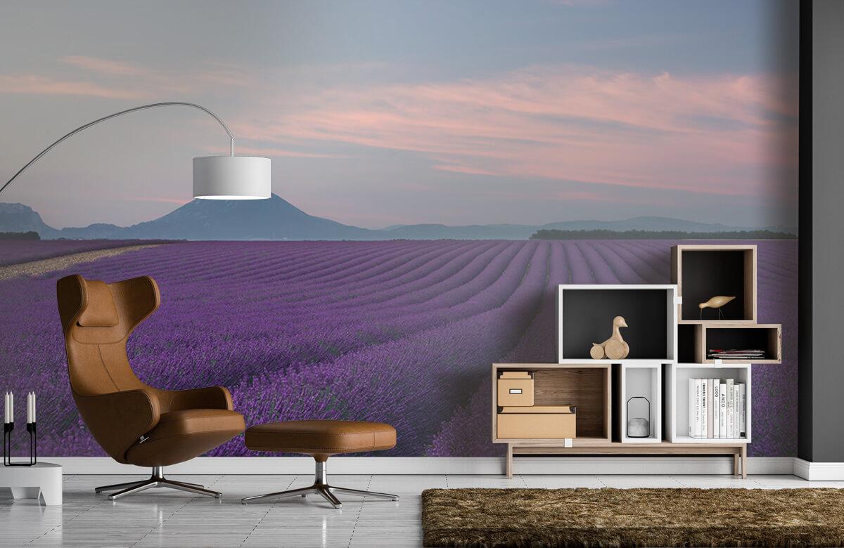Landscape Lavender field 9