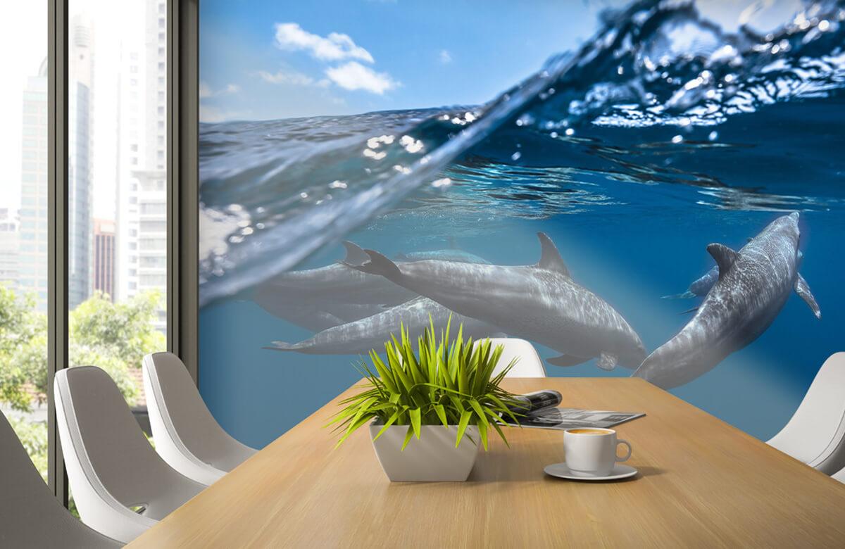 Underwater Dolphins 5