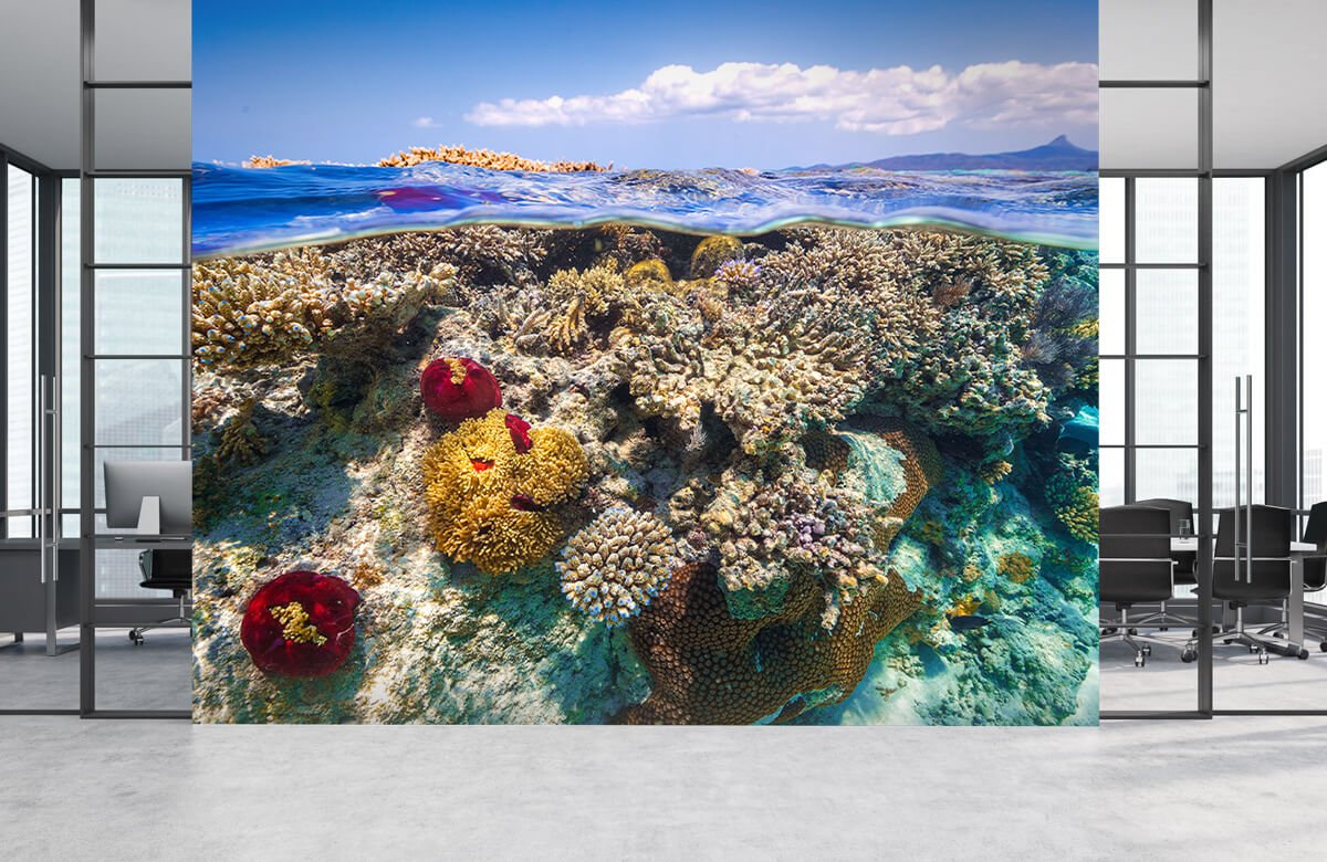 Underwater Mayotte : The Reef 8