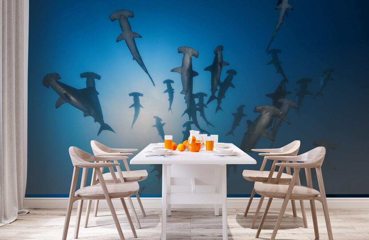 Underwater Hammerhead Shark - Underwater Photography 4