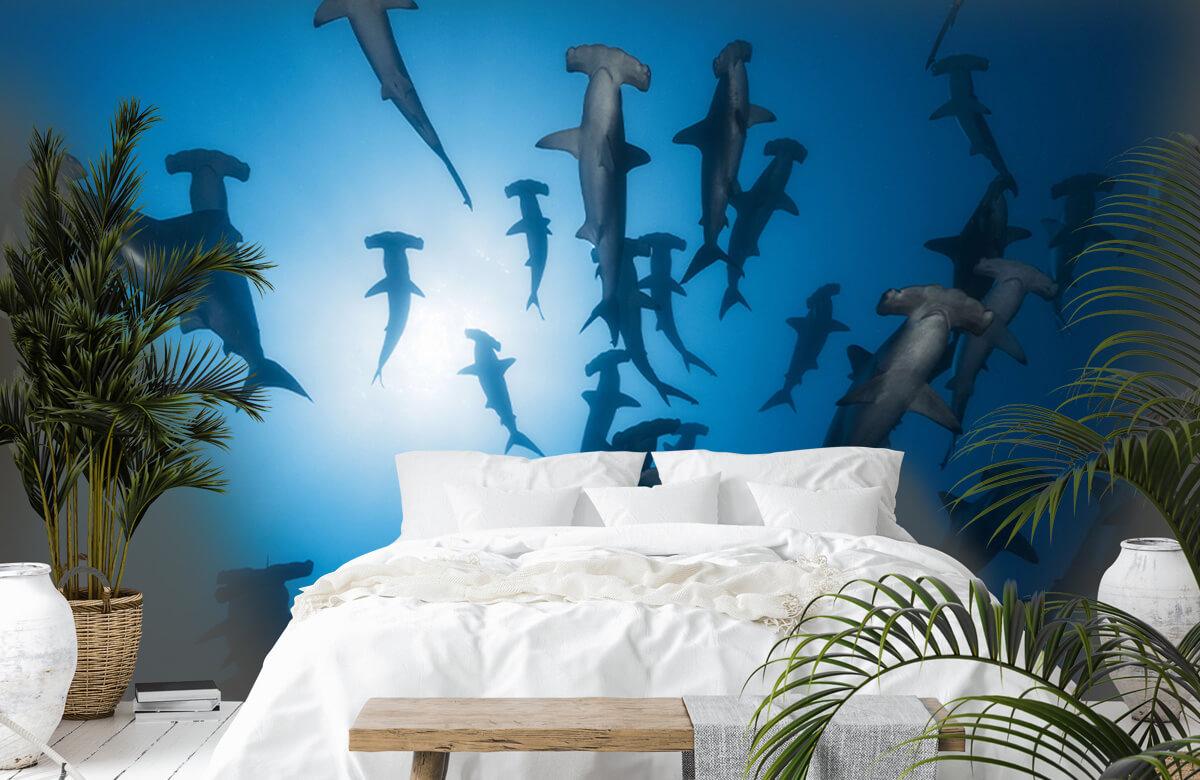 Underwater Hammerhead Shark - Underwater Photography 3