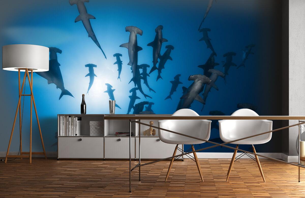 Underwater Hammerhead Shark - Underwater Photography 2